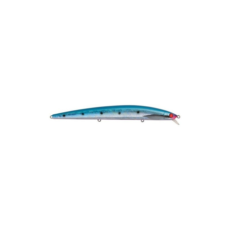 blue sardine